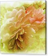 Yellow And Pink Roses Canvas Print