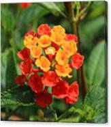 Yellow And Red Flowers On A Branch Canvas Print