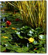 Yellow And Red Water Lilies In A Pond Canvas Print