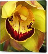 Yellow And Russet Orchid Canvas Print