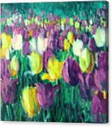 Yellow And Violet Tulips Canvas Print