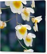 Yellow And White Cascading Flowers Canvas Print