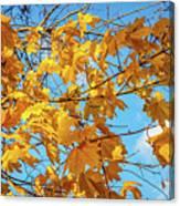 Yellow Autumn Leaves 2 Canvas Print