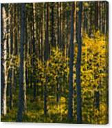 Yellow Autumn Trees In Forest Canvas Print