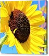 Yellow Beauty  Canvas Print