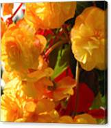 Yellow Begonia Flowers.  Victoria Canvas Print