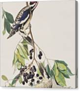Yellow Bellied Woodpecker Canvas Print