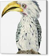 Yellow-billed Hornbill Watercolor Painting Canvas Print