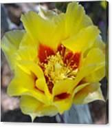 Yellow Blossom Canvas Print