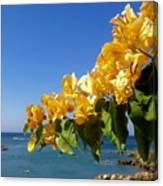 Yellow Bougainvillea Over The Mediterranean On The Island Of Cyprus Canvas Print