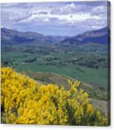 Yellow Broom Over Pasture In Dalefield Canvas Print