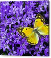 Yellow Butterfly On Mee Canvas Print