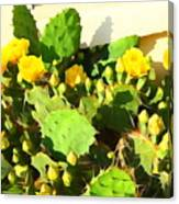 Yellow Cactus Blossoms 594 Canvas Print