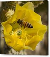 Yellow Cactus Flower With Wasp Canvas Print