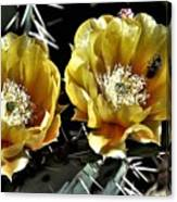 Yellow Cactus Flowers Canvas Print