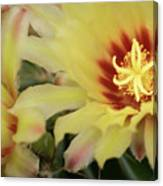 Yellow Cactus Plant Flower Canvas Print