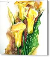 Yellow Callas Canvas Print