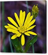 Yellow Camphorweed Canvas Print