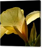 Yellow Canna Canvas Print