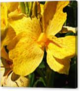 Yellow Canna Lily Canvas Print