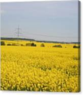 Yellow Canola Field Canvas Print
