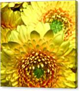 Yellow Cluster Canvas Print