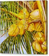 Yellow Coconuts- 01 Canvas Print