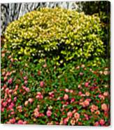 Yellow Coleus And Lantana At Pilgrim Place In Claremont-california Canvas Print