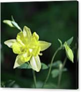 Yellow Columbine Squared Canvas Print
