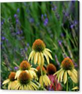 Yellow Coneflowers And Lavender 1633 H_2 Canvas Print