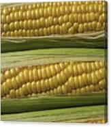 Yellow Corn Canvas Print