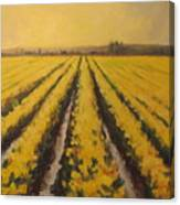 Yellow Daffodil Glow Canvas Print
