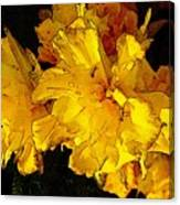 Yellow Daffodils 4 Canvas Print