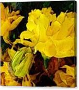 Yellow Daffodils 6 Canvas Print