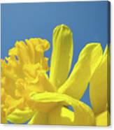 Yellow Daffodils Flowers Art Blue Sky Spring Baslee Troutman Canvas Print