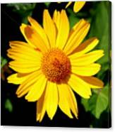 Yellow Daisey Canvas Print