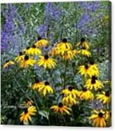 Yellow Daisies And Purple Sage Canvas Print