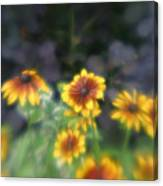 Yellow Daisies In Monets Garden Canvas Print
