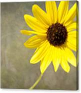 Yellow Daisy By Darrell Hutto Canvas Print
