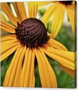 Yellow Daisy I Canvas Print