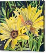 Yellow Daisy Canvas Print