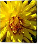 Yellow Daliha Canvas Print