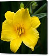 Yellow Daylily Flower Canvas Print