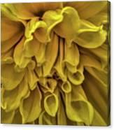 Yellow Dinner Plate Dahlia Canvas Print
