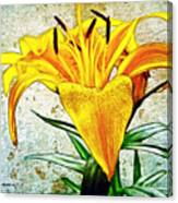 Yellow Easter Lily Canvas Print