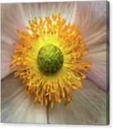 Yellow Eye Canvas Print