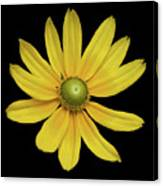 Yellow Eyed Daisy In Black Canvas Print