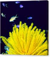 Yellow Feather Star Canvas Print