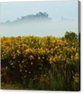 Yellow Field And The Fog Canvas Print