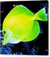 Yellow Fish Canvas Print